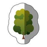 ensemble de timbre de couleur d'icône abstraite d'arbre Photographie stock libre de droits