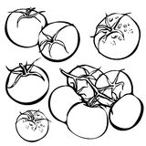 Ensemble de tomate tirée par la main Nourriture organique d'eco Photo stock