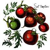Ensemble de tomates tirées par la main d'isolement sur le blanc Photo libre de droits
