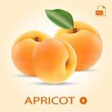 Ensemble de trois abricots frais avec la feuille Photos stock