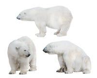 Ensemble de trois ours blancs blancs Photo stock