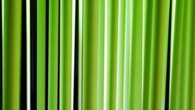 Ensemble de tube au néon décoratif Fond d'éclairage banque de vidéos