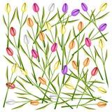 Ensemble de Tulip Flowers Background fraîche illustration de vecteur