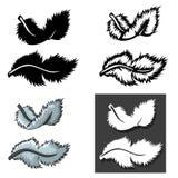 Ensemble de types de plumes avec le concept différent illustration de vecteur