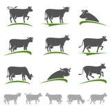 Ensemble de vache Vecteur Photographie stock libre de droits