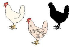 Ensemble de variation de pièces de poulet illustration de vecteur