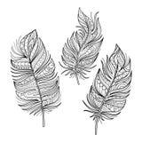 Ensemble de vecteur de belles plumes de Deco illustration stock