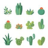 Ensemble de vecteur de cactus de bande dessinée et de bande dessinée de succulents illustration libre de droits