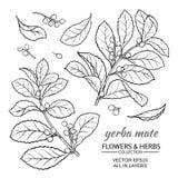 Ensemble de vecteur de compagnon de Yerba illustration stock
