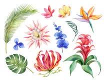 Ensemble de vecteur d'aquarelle avec les feuilles tropicales et les fleurs exotiques lumineuses d'isolement sur le fond blanc Image libre de droits