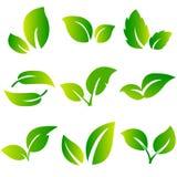 Ensemble de vecteur d'icône de feuilles d'isolement sur le fond blanc Diverses formes des feuilles vertes des arbres et des usine Image libre de droits
