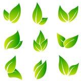 Ensemble de vecteur d'icône de feuilles d'isolement sur le fond blanc Diverses formes des feuilles vertes des arbres et des usine Images libres de droits