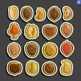 Ensemble de vecteur d'icônes Nuts Images stock