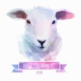 Ensemble de vecteur d'illustrations d'aquarelle Moutons mignons Images stock