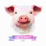 Ensemble de vecteur d'illustrations d'aquarelle Porc mignon Image stock