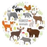 Ensemble de vecteur de cercle de plantes et d'animaux de forêt Photos stock