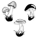 Ensemble de vecteur de champignons Collection de champignons comestibles stylisés Dessin noir et blanc à la main art linéaire tat Illustration Stock