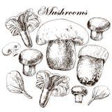 Ensemble de vecteur de champignons comestibles tirés par la main Images libres de droits