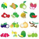 Ensemble de vecteur de fruits tropicaux illustration stock