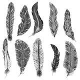 Ensemble de vecteur de plumes Images stock