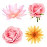 Ensemble de vecteur de quatre fleurs d'isolement sur le blanc Images stock