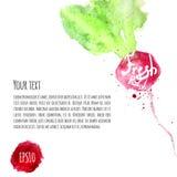 Ensemble de vecteur de radis coloré d'aquarelle pour le votre Photos stock