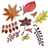 Ensemble de vecteur de feuilles dans le style de griffonnage Tiré par la main illustration stock