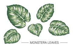 Ensemble de vecteur de feuilles tropicales de monstera illustration de vecteur