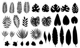 Ensemble de vecteur de feuilles tropicales de silhouette, fleurs illustration libre de droits