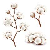 Ensemble de vecteur de fleurs de coton illustration stock
