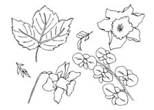 Ensemble de vecteur de fleurs de griffonnage illustration libre de droits