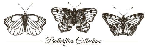 Ensemble de vecteur de papillons noirs et blancs tir?s par la main illustration stock