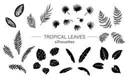 Ensemble de vecteur de silhouettes de feuilles de plante tropicale illustration stock