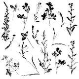 Ensemble de vecteur de timbre d'encre des herbes photos stock