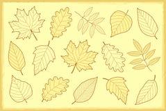 Ensemble de vintage de feuilles d'automne Image stock