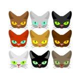 Ensemble de visage de chat Couleur différente de chats principaux Collection d'animal familier de museau Images libres de droits