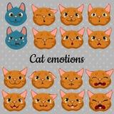 Ensemble de visages des chats sur un fond gris Image libre de droits