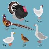 Ensemble de volaille domestique, oiseaux de bande dessinée de ferme avicole : faisan, dinde, oie, poulet, canard et cailles Photos stock