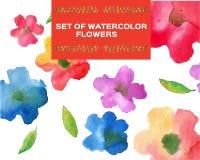 Ensemble de wanercolor de fleurs Image stock