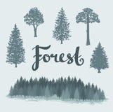 Ensemble des arbres tirés par la main d'isolement à feuilles caduques et coniféres Image libre de droits