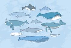 Ensemble différent de baleine Collection tirée par la main d'illustration de griffonnage Images stock