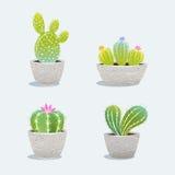 Ensemble du cactus quatre dans le pot de fleur photo libre de droits
