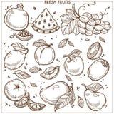 Ensemble exotique frais de fruit tropical de ferme d'icônes de vecteur de croquis de fruits illustration de vecteur