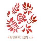 Ensemble floral d'aquarelle Images libres de droits