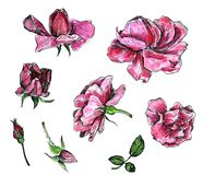 Ensemble floral d'aquarelle Photos stock