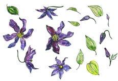 Ensemble floral d'aquarelle Photo libre de droits
