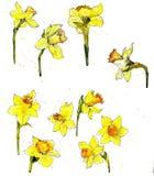 Ensemble floral d'aquarelle Photographie stock libre de droits