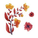 Ensemble floral d'aquarelle Images stock