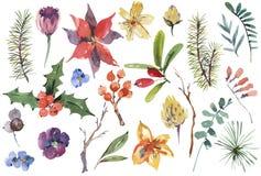 Ensemble floral d'aquarelle d'hiver d'éléments de conception de Noël illustration libre de droits