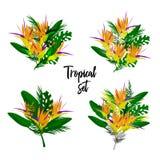 Ensemble floral de vecteur tropical illustration de vecteur